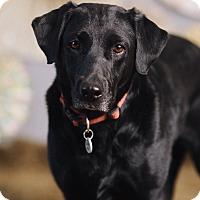 Adopt A Pet :: Claire - Portland, OR