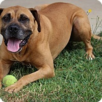 Adopt A Pet :: Champ-Adoption Pending - Pinehurst, NC