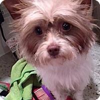 Adopt A Pet :: Lola-Pending Adoption - Omaha, NE