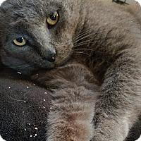Adopt A Pet :: Jupiter - Adoption Pending! - Colmar, PA