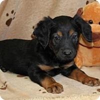 Adopt A Pet :: Gloria - Salem, NH