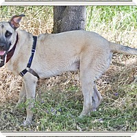 Adopt A Pet :: Scooby loves water - Sacramento, CA