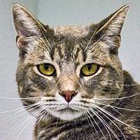 Adopt A Pet :: Billy - Prescott, AZ