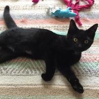 Adopt A Pet :: Luke Albion - Ann Arbor, MI