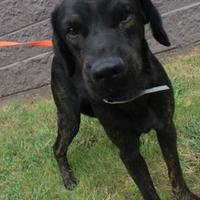 Adopt A Pet :: Mike - Anderson, SC