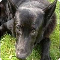 Adopt A Pet :: Jack - BC Wide, BC