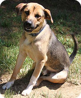 German Shepherd Dog/Beagle Mix Dog for adoption in Stewart, Tennessee - Cash