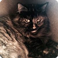 Adopt A Pet :: Margo couch potato companion - McDonough, GA