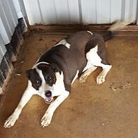 Adopt A Pet :: Tika - San antonio, TX