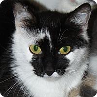 Adopt A Pet :: Petunia - adoption pending - North Branford, CT