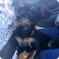 Adopt A Pet :: Julianna - Fort Lauderdale, FL
