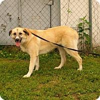 Adopt A Pet :: Lucy - 042527k - Tupelo, MS