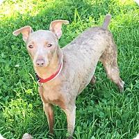 Adopt A Pet :: Pepe - Va Beach, VA