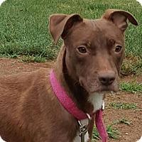 Adopt A Pet :: Henna - Mechanicsburg, PA