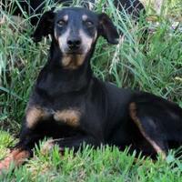 Adopt A Pet :: Mack - Wichita Falls, TX