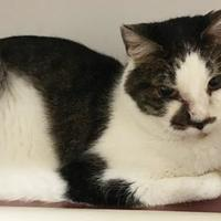 Adopt A Pet :: Byers - Twinsburg, OH