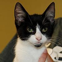 Adopt A Pet :: Cookie - Salem, WV