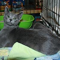 Adopt A Pet :: Rain - Rochester, MN