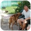 Photo 2 - Coonhound (Unknown Type) Mix Dog for adoption in Miami Beach, Florida - Gomer, FL
