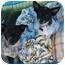 Photo 3 - Australian Cattle Dog Mix Puppy for adoption in Phoenix, Arizona - Sir Samuel
