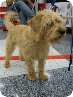Terrier (Unknown Type, Small) Mix Dog for adoption in San Dimas, California - Cal