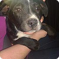 Adopt A Pet :: Oreo - Ranger, TX