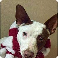 Adopt A Pet :: Spot - Niceville, FL