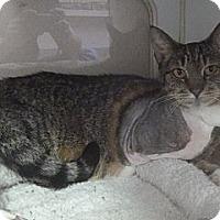 Adopt A Pet :: Eileen - St. Petersburg, FL