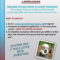 Adopt A Pet :: I WANT TO FOSTER TO ADOPT - Royal Palm Beach, FL
