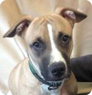 Terrier (Unknown Type, Medium)/Basset Hound Mix Dog for adoption in Mt. Pleasant, Michigan - Frankie