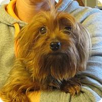 Adopt A Pet :: Little China - Greenville, RI
