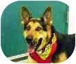 German Shepherd Dog Mix Dog for adoption in Baytown, Texas - Steel