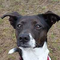 Adopt A Pet :: Noella - Grayslake, IL