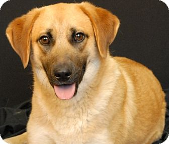 Shepherd (Unknown Type) Mix Dog for adoption in Newland, North Carolina - Parker
