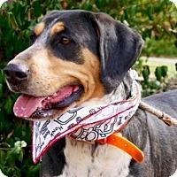 Adopt A Pet :: Betty Jo - Sweetwater, TN