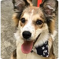 Adopt A Pet :: Remi - Butler, KY