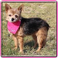 Adopt A Pet :: Tina - Hillsboro, TX