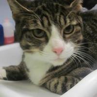 Adopt A Pet :: Toby - Wantagh, NY
