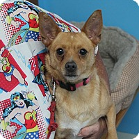 Adopt A Pet :: Goldie*FOSTER NEEDED!* - Chicago, IL