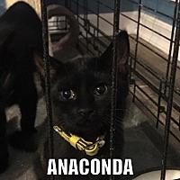 Adopt A Pet :: Anaconda - Hernando, MS