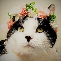 Adopt A Pet :: Damien - Long Beach, NY