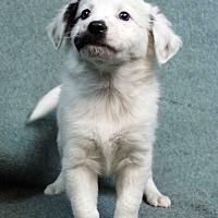 Adopt A Pet :: Katy - Westminster, CO