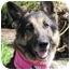 Photo 1 - German Shepherd Dog Dog for adoption in San Diego, California - Nikki