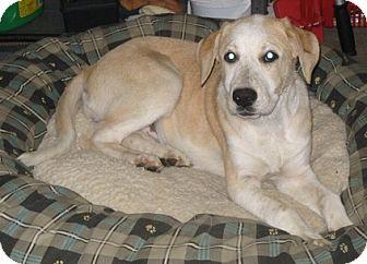 Cattle Dog Mix Puppy for adoption in Danbury, Connecticut - Queenie