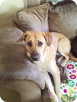 Labrador Retriever Mix Dog for adoption in Eddy, Texas - Courtesy Post - Lucy