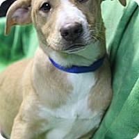 Adopt A Pet :: Aurora - Wytheville, VA