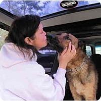Adopt A Pet :: Roman - Green Cove Springs, FL
