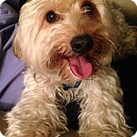 Adopt A Pet :: Jack #3 - Orange, CA
