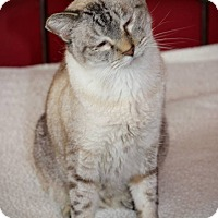 Adopt A Pet :: Paul - San Antonio, TX