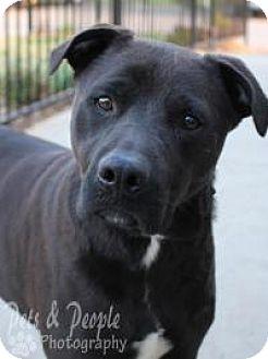 Labrador Retriever Mix Dog for adoption in Yukon, Oklahoma - Blake